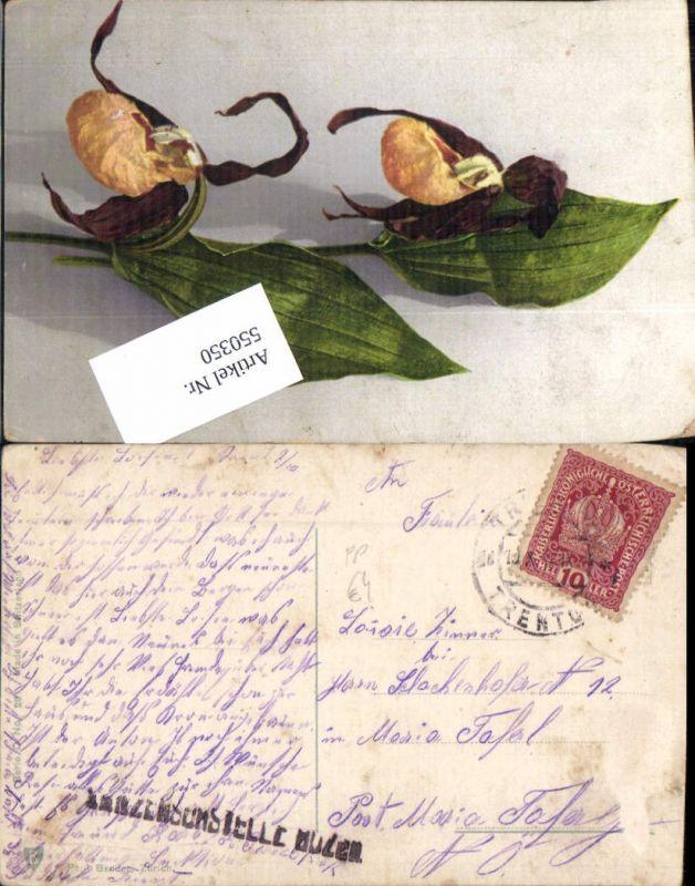 550350,K.K. Feldpost Zensurstelle Bozen Bolzano m. Maria Taferl Trento