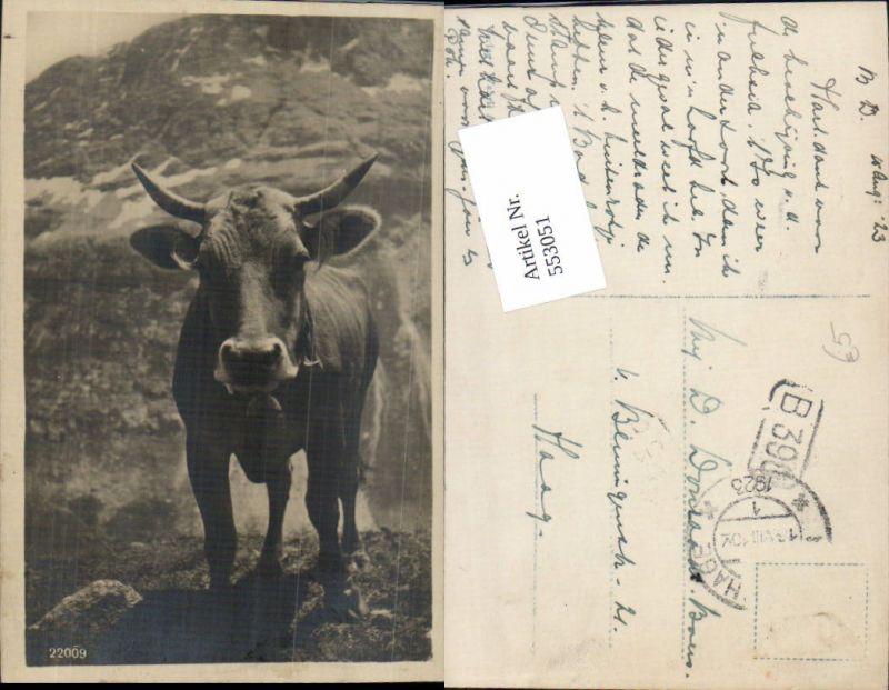 553051,Tiere Stier Rind Kuh