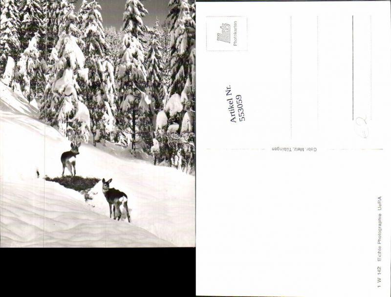 553059,Tiere Rehe Reh Wild Schnee
