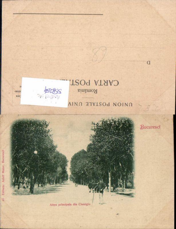 558254,Romania Bukarest Bucuresci Aleea principala din Cismigiu