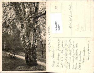 560140,Baum Birke Bäume Wald