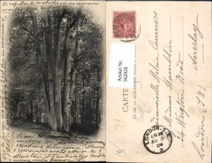 562928,Foret de Fontainebleau Le Nide de l Aigle Bäume Baum
