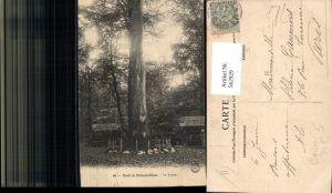 562929,Foret de Fontainebleau Le Jupiter Bäume Baum