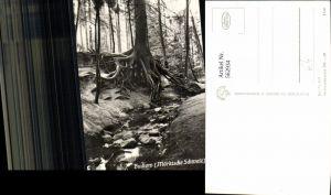 562934,Foto Ak Buckow Märkische Schweiz Wurzelfichte Bäume Baum
