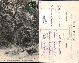 562935,Foret de Fontainebleau Le Charlemagne Bäume Baum