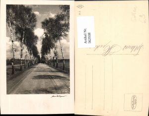 562938,Foto Ak Allee Soltauer Heide Soltau Birken Birke Bäume Baum