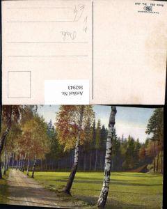 562943,Birke Birken Allee Bäume Baum pub Photochromie Nenke & Ostermaier 334/4940