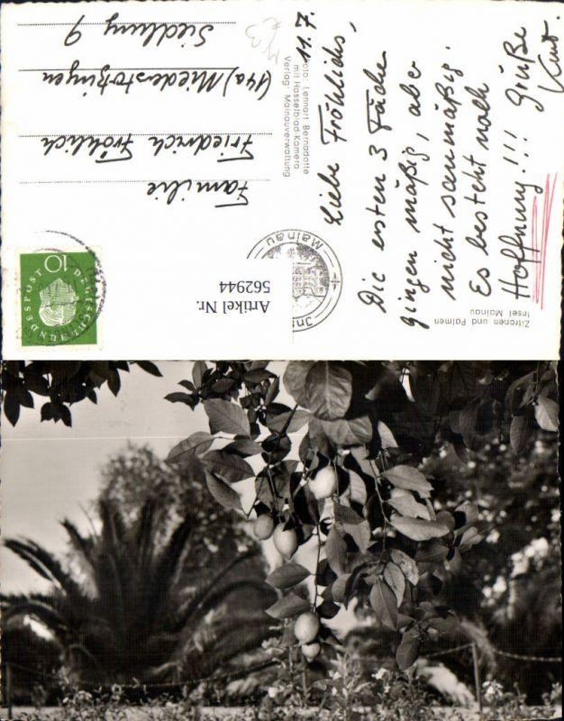 562944,Zitronen u. Palmen Insel Mainau Zitronenbaum Bäume Baum