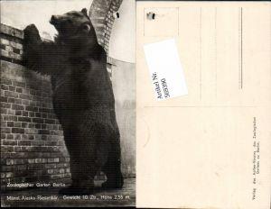 569390,Berlin Zoo Zoologischer Garten Bär Alaska Riesenbär