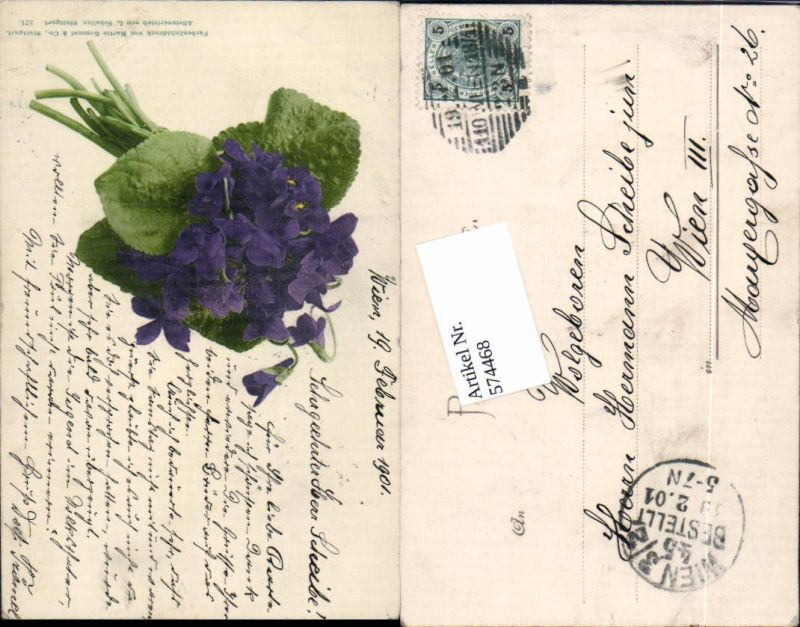 574468,Blumen Botanik Veilchen pub Martin Rommel & Co. 521