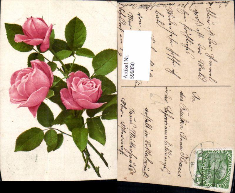 596850,Rosa Rosen Blüten Knospen Blumen