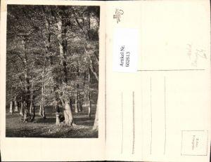 602613,Foto Ak Wald Bäume Baum