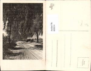 602614,Foto Ak Allee Bäume Baum