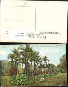 390400,India Calcutta Kalkutta Botanical Gardens Palm Trees Palmen