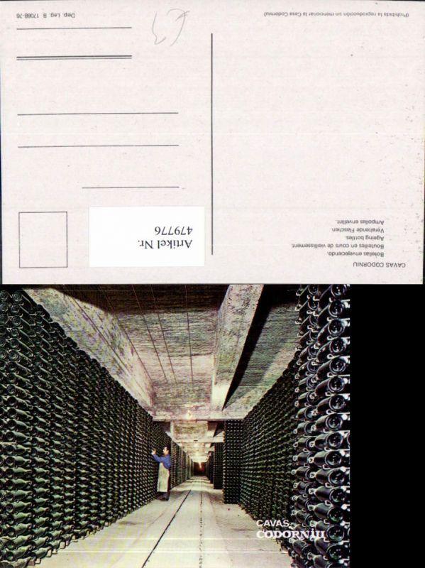479776,Cavas Codorniu Veraltende Flaschen Weinkeller Wein Alkohol