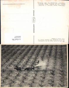 609227,Met man en macht tracht men de vruchtbomen die in de Stormramp 1953 gespaard bleven Netherlands