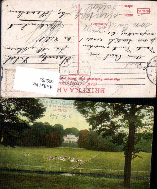 609255,Arnhem Sonsbeek Weide Kühe Rinder Netherlands