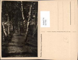 617705,Swetlogorsk Rauschen Birkenweg a.d Gausuppschlucht Birken Russia