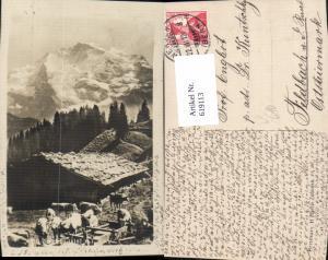 619113,Wengen Die Jungfrau Hütte m. Kühe Rinder pub H. Martin Zofingen