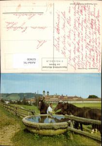 619430,Einsiedeln Kloster Wallfahrtskirche Pferdetränke Pferd Brunnen