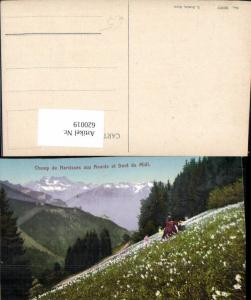 620019,Montreux Champ de Narcisses aux Avants et Dent du Midi Blumen Narzissen