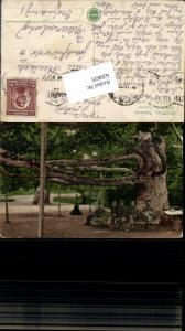 620835,Belgrad Belgrade Beograd Serbia Yugoslavia Baum Großer Baum Tree Soldaten