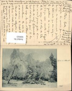 626323,L Hiver dans les Hautes-Vosges Altmatt Baum Rothenthurm Switzerland
