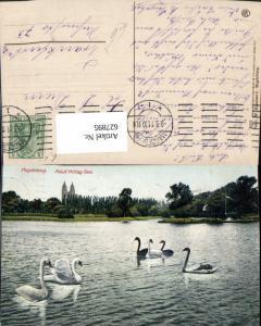 627895,Magdeburg Adolf-Mittag-See Schwan Schwäne