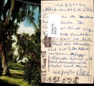 630127,Live Oaks and Camellias Deep South Jackson Mississippi