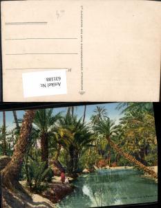 631188,Oued dans la Palmeraie Palmen Volkstypen