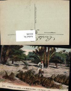 631195,Scenes et Types La Recolte des Dattes Les Regimes Dattelernte Volkstypen
