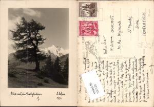 637129,Fotokunst Dr. Defner Sl 6 Kals am Großglockner Baum