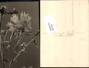 637130,Fotokunst Näher Reutlingen Pflanzen Botanik