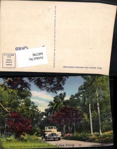 645796,Florida Palm lined drive Everglades National Park Auto Oldtimer