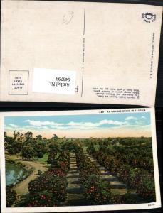 645799,Florida Orange Grove Orangen Plantage