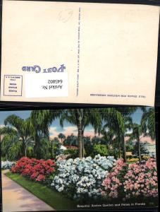 645802,Florida Beautiful Azalea Garden Palms Palmen