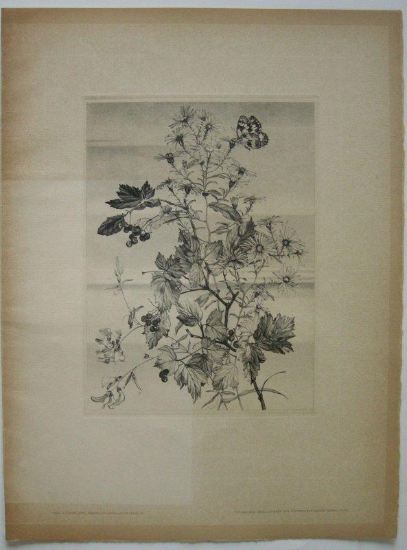 Hans Ranzoni jun (1892-1945) Herbst Herbstblumen Orig. Kupferstich 1932