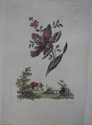 Wiesenblumen kolor Orig Kupferstich in Crayonmanier Auvray nach Naudet 1790