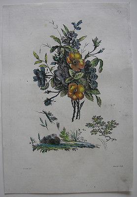 Nelken kolor Orig Kupferstich in Crayonmanier Auvray nach Naudet 1790