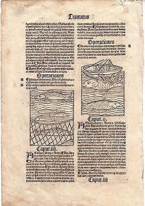 Inkunabelblatt de Piscibus Fische 4 Orig Holzschnitte 1495 rubriziert