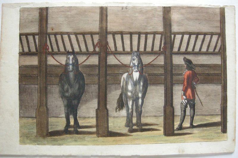 Peter Troschel Im Stall Kopfleine kolor Kupferstich 1678 Pferdedressur