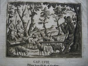 Von der Schaf-Lecken Schafzucht Landwirtschaft Org Kupferstich 1701