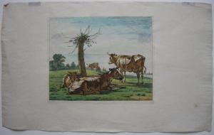W. J. van Troostwyk (1782-1810) Kühe auf der Weide kolor Orig Kupferstich 1810