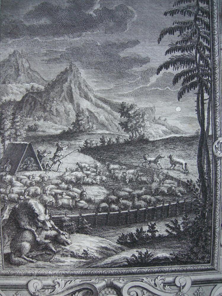Treue Hirt Jakob Schafherde im Pferch Org Kupferstich Scheuchzer-Bibel 1731 1