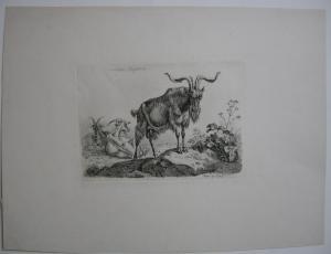 Johann Adam Klein (1792-1875) Römischer Ziegenbock Orig Radierung 1845