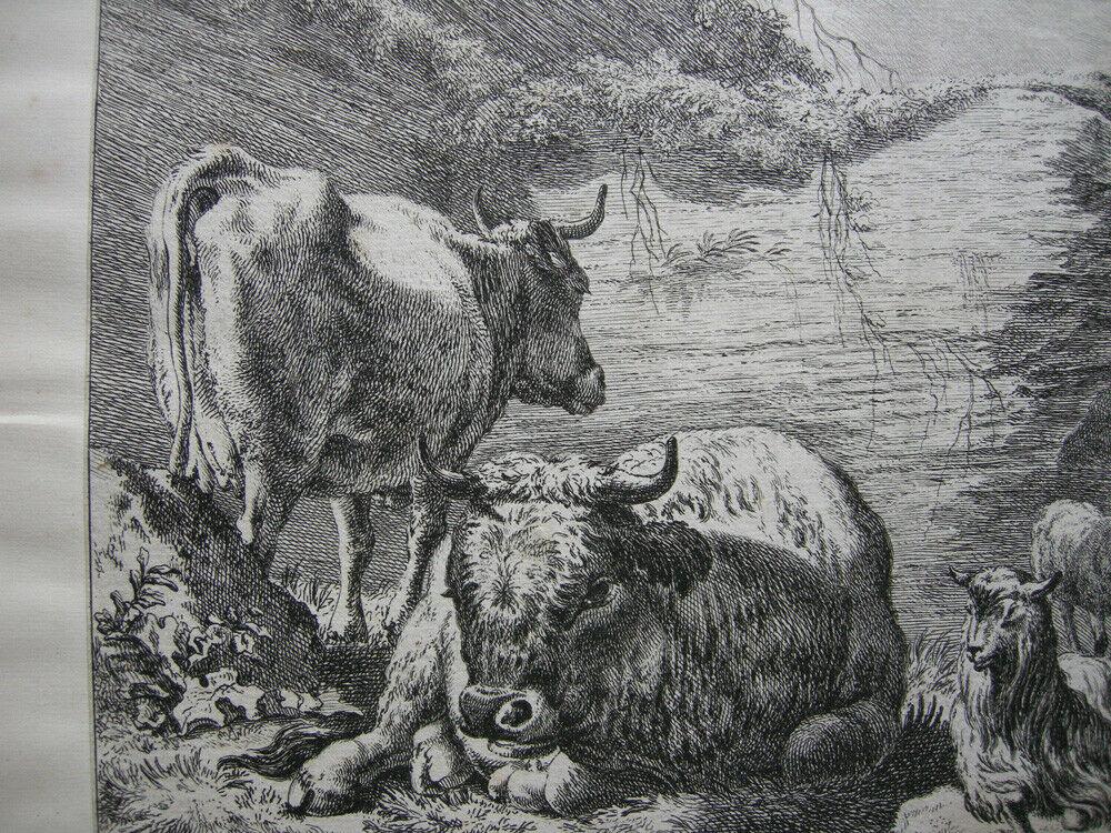 Joh. Heinr. Roos (1631-1685) Kühe Schaf Ziegen vor Felsen Orig Kupferstich 1670 2