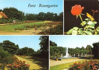 Ansichtskarte, Forst, 75 Jahre Forster Rosengarten, vier Abb., 1988