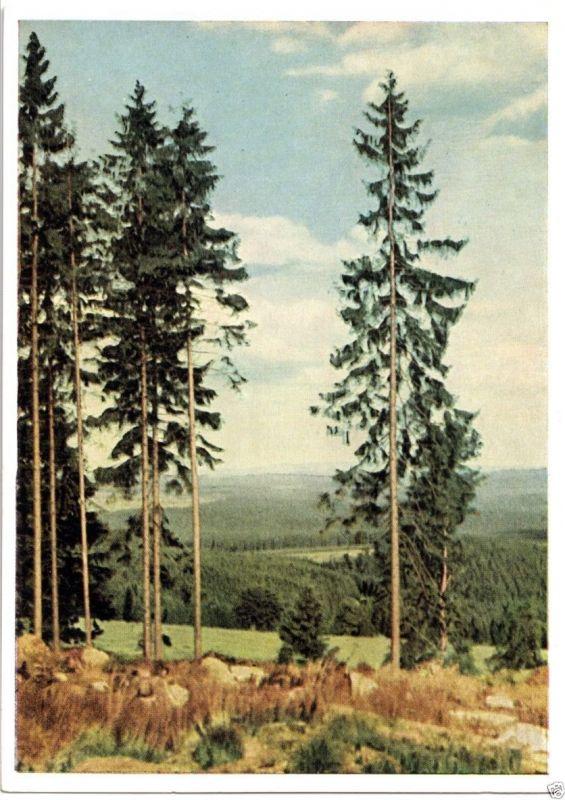 Ansichtskarte, Waldpartie, Thüringen?, früher DDR - Farbdruck, 1957