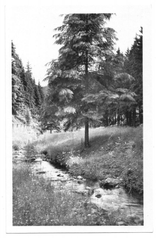 Ansichtskarte, Sonneberg Thür. Wald, Im Röthengrund, 1953
