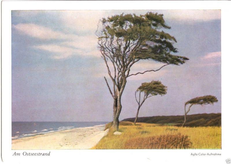 Ansichtskarte, Am Ostseestrand, Windflücher, früher DDR-Farbdruck, 1956